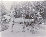 Image - photo - In the driveway of one of Northcote's mansions, c1895